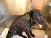Labrador in the bath