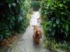dogwalking1a
